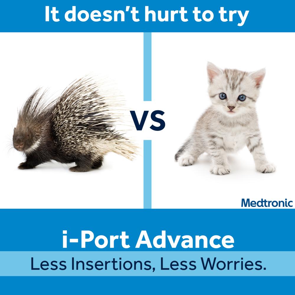 porcupine_vs_kitten_FINAL.png