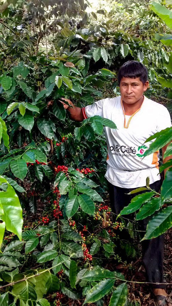 Usda Organic Fair Trade - Peru Sol y Café Peru - Picker