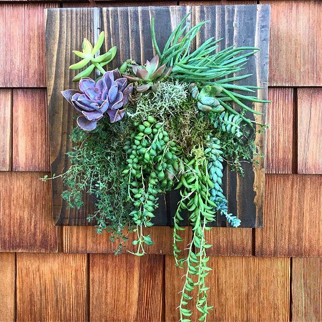 Working on that green thumb 👩🏻🌾🌿#succulents #verticalgarden