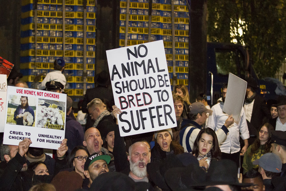 Animal rights activists showed up in great numbers to protest the cruel and anachronistic practice of animal sacrifice.