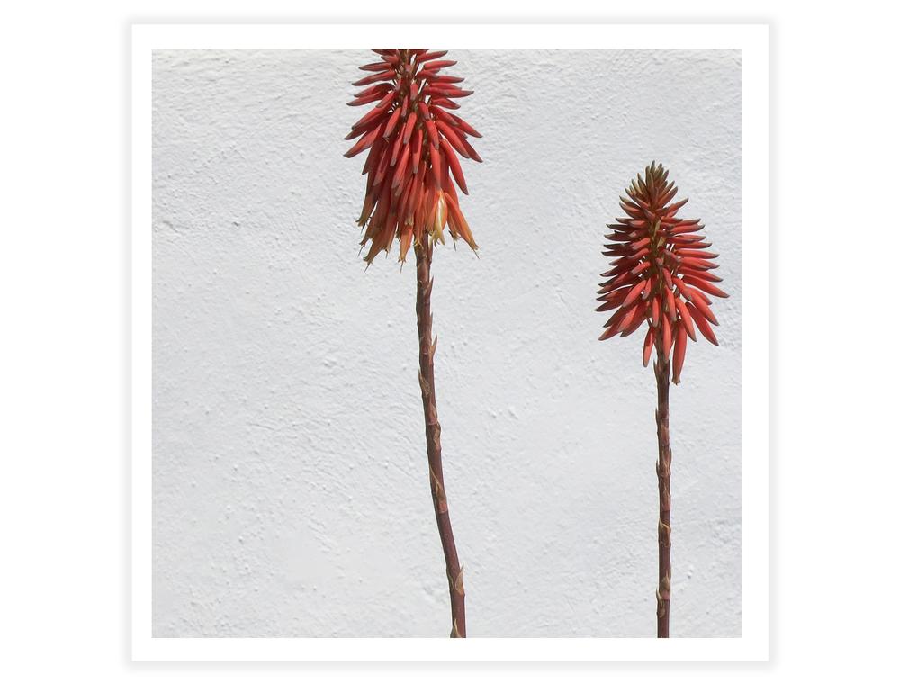 santoflowers2.jpg