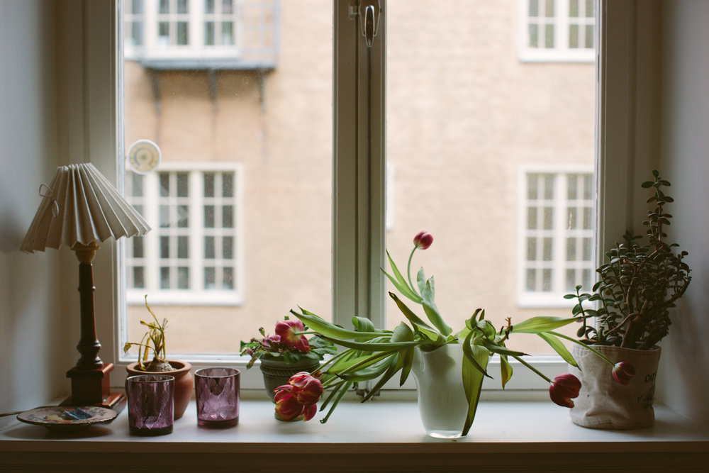 A Swedish windowsill with drooping tulips