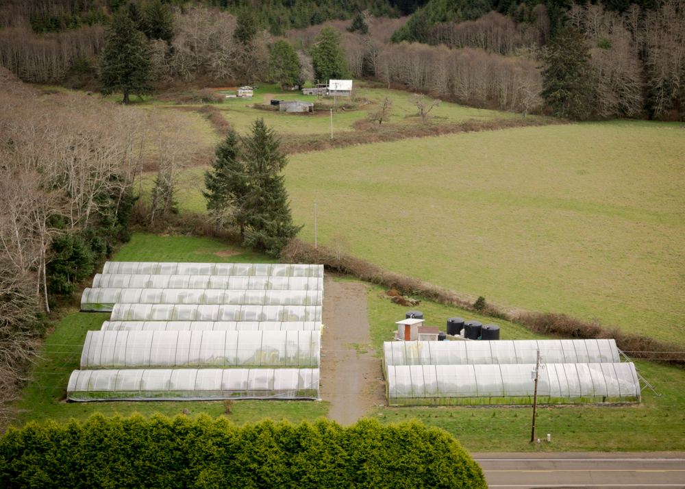 Our farm - the stream is just behind the greenhouses.