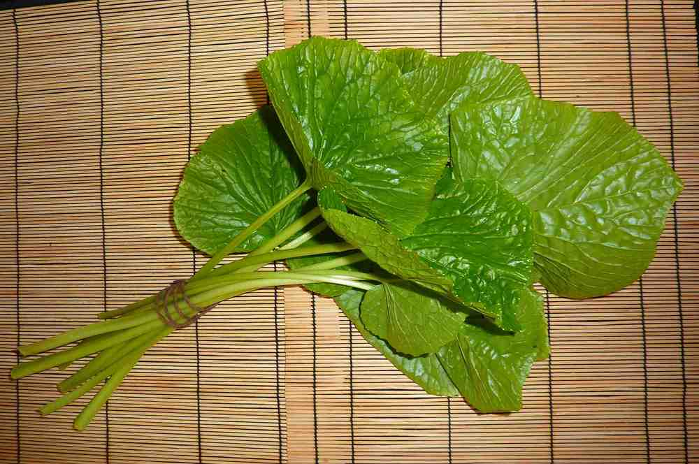 We sell the stems (petioles) attached to the leaves.  There are approximately 35 leaves per pound.  They are available year-round.