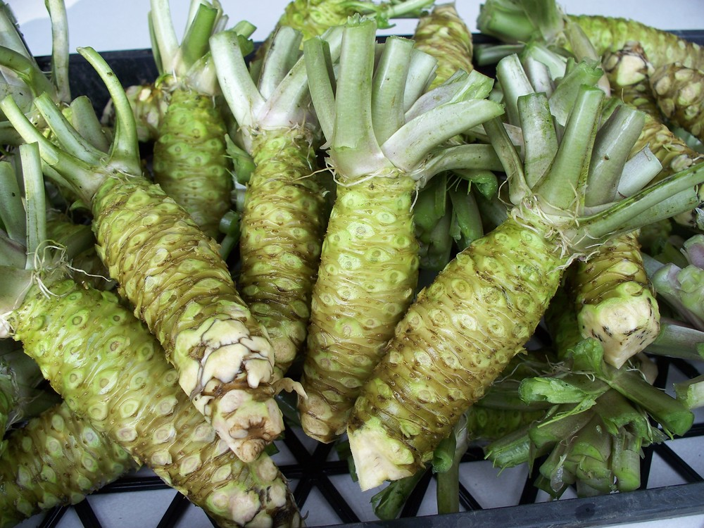 All About Real Fresh Wasabi - Steamy Kitchen Recipes