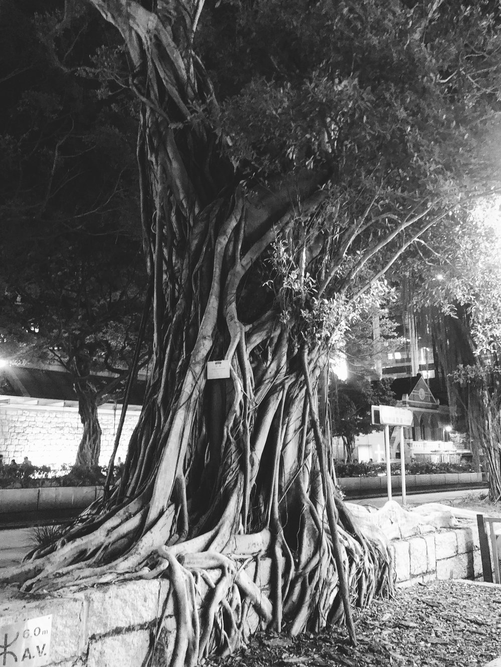 side roots