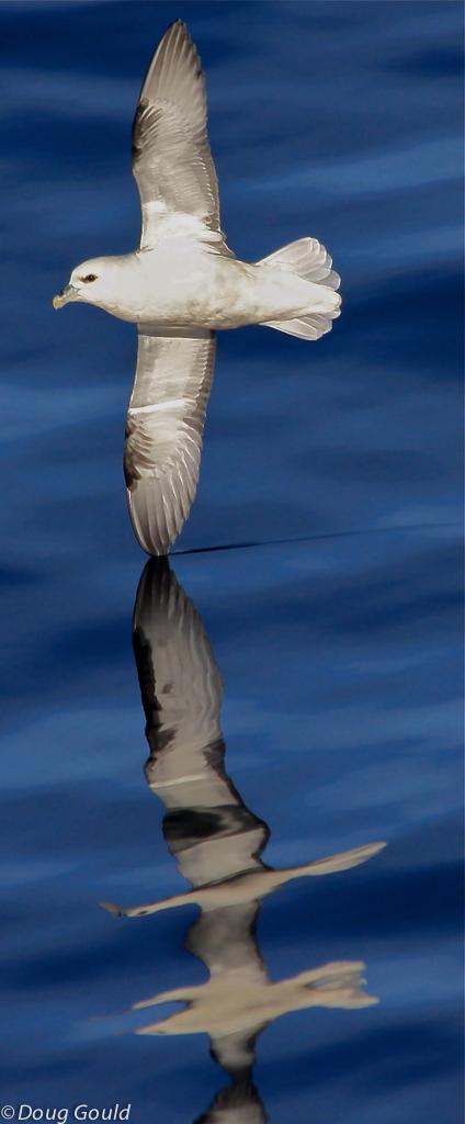 birds (1 of 26).jpg