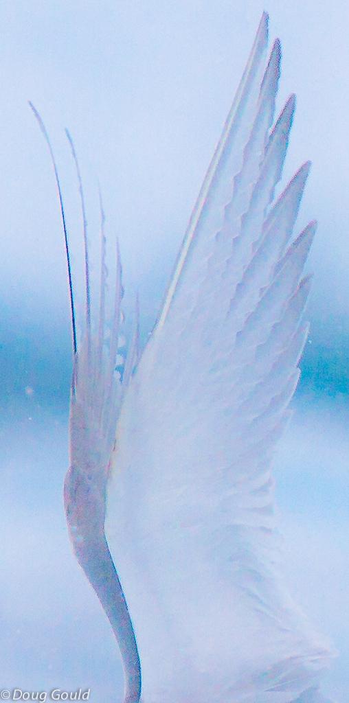 birds (4 of 26).jpg