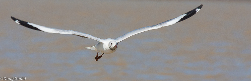 birds (11 of 26).jpg