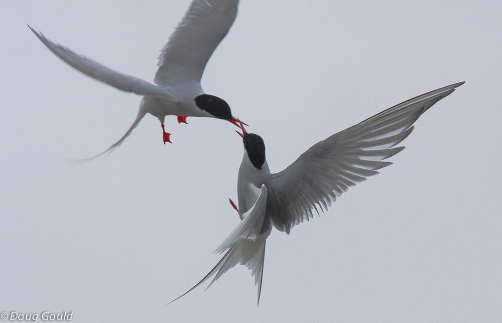 birds (12 of 26).jpg