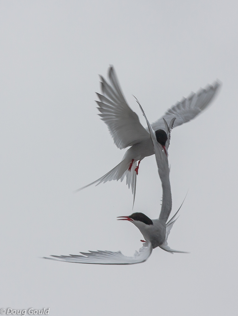 birds (13 of 26).jpg