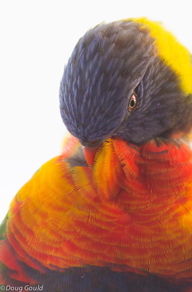 birds (19 of 26).jpg