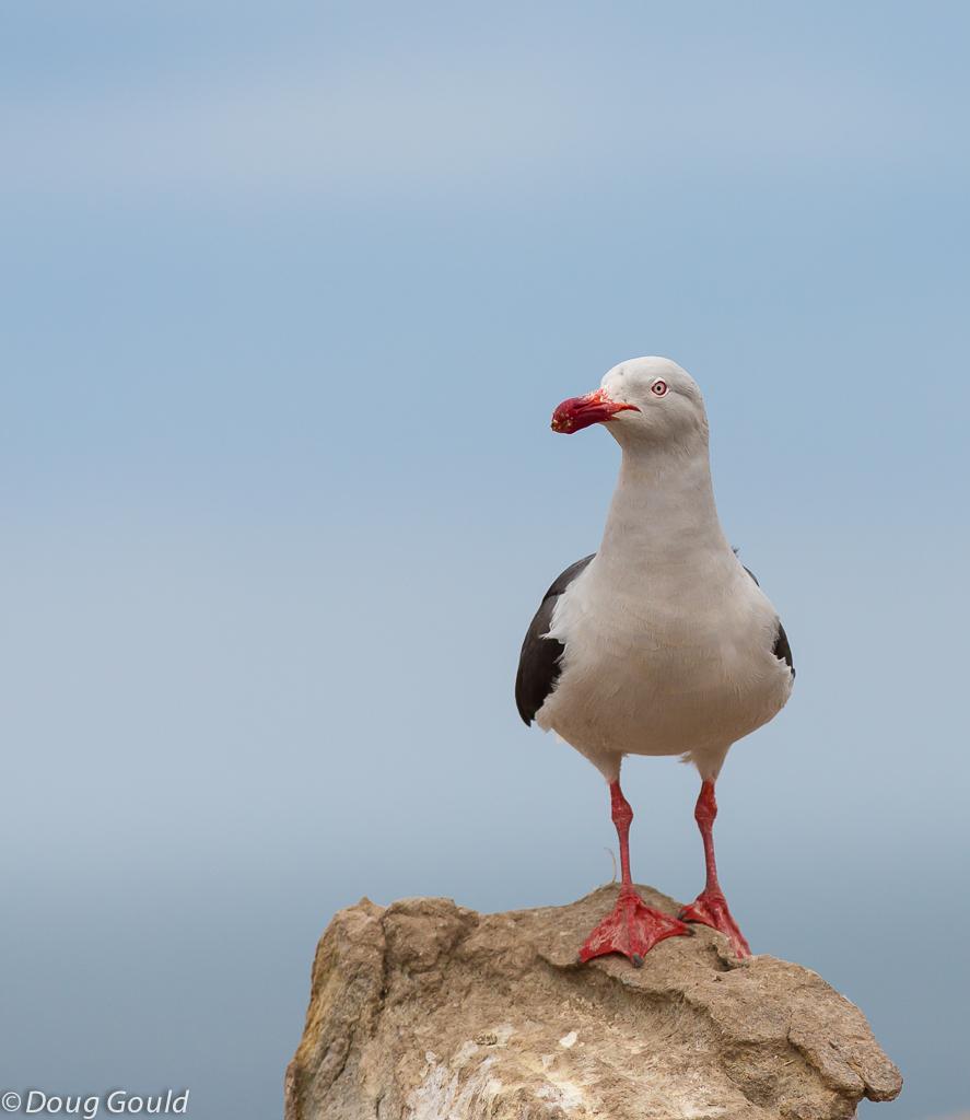birds (22 of 26).jpg