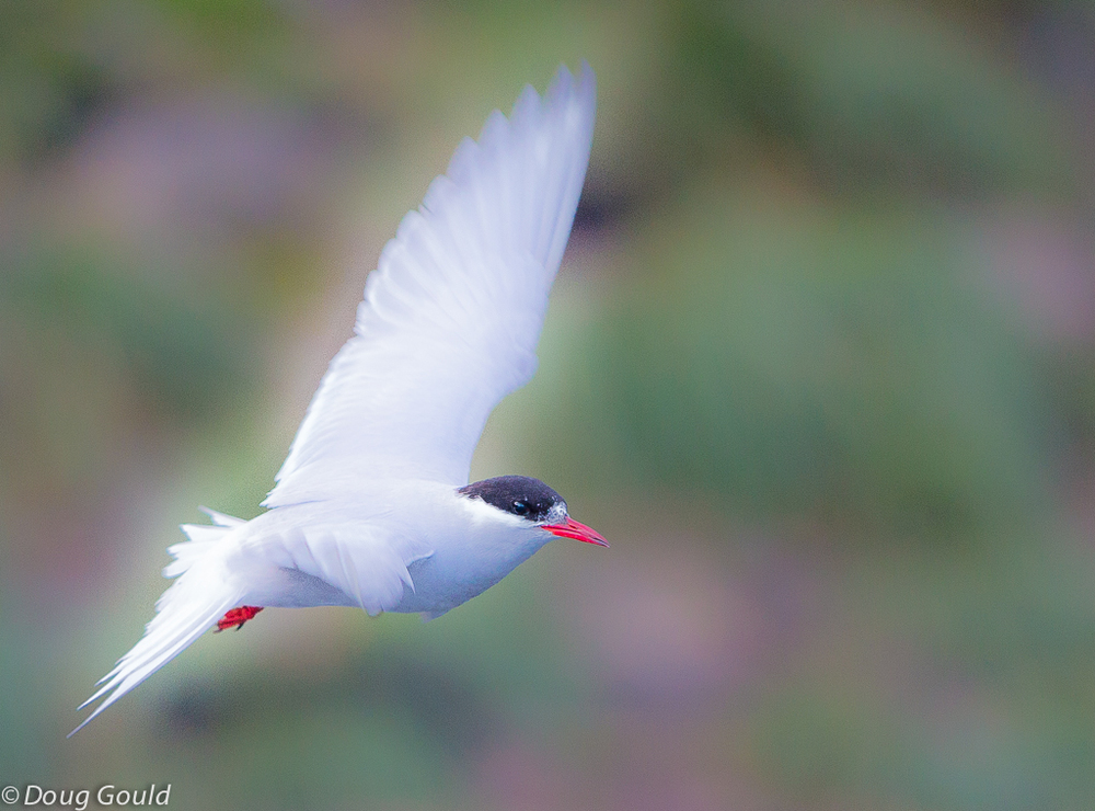 birds (25 of 26).jpg