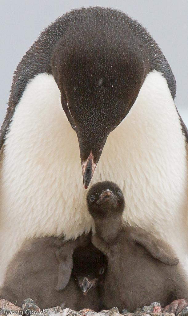 penguins (2 of 13).jpg