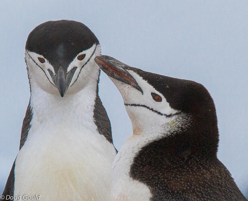 penguins (3 of 5).jpg