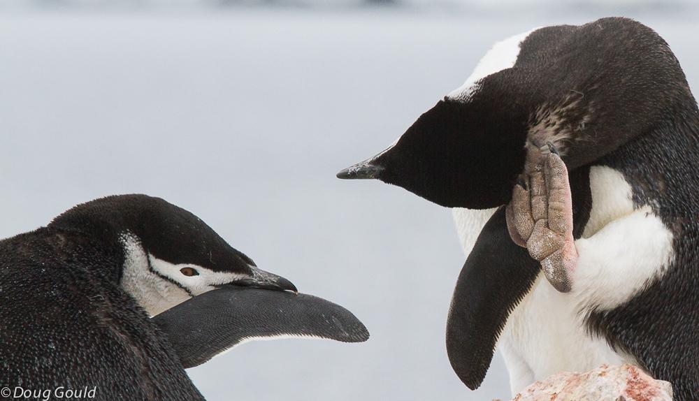 penguins (4 of 5).jpg