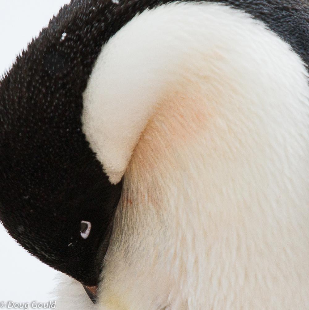 penguins (3 of 13).jpg