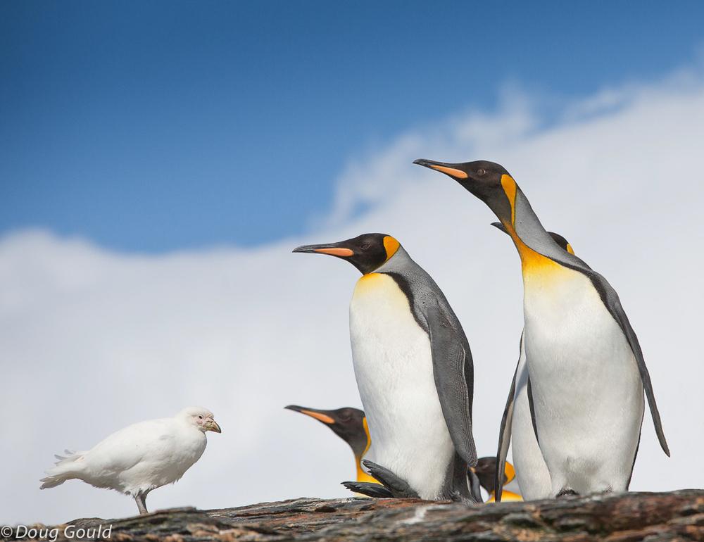 penguins (5 of 13).jpg