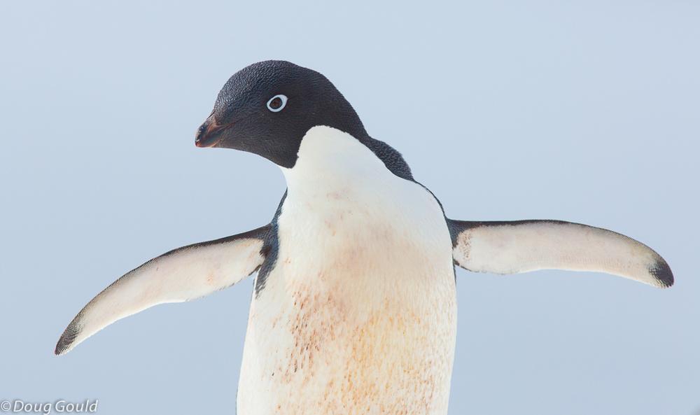 penguins (6 of 13).jpg