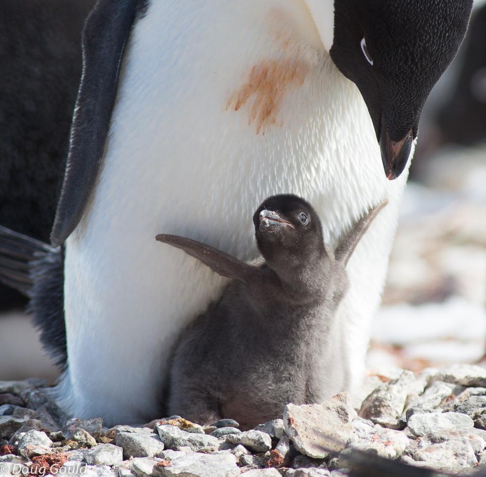 penguins (8 of 13).jpg