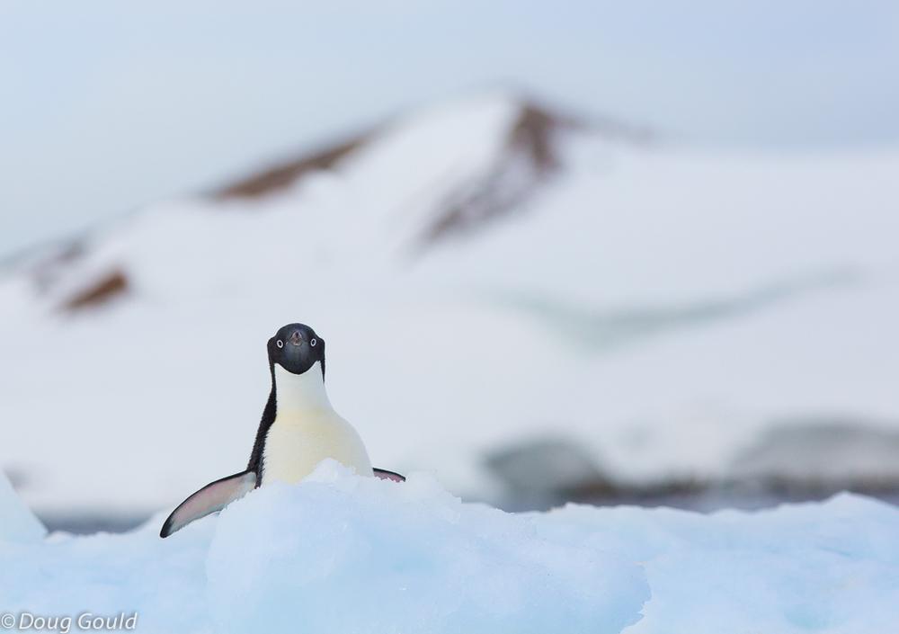 penguins (10 of 13).jpg