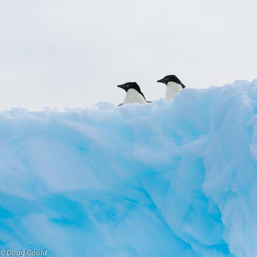 penguins (9 of 13).jpg