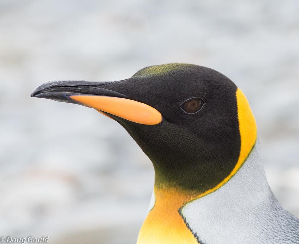 penguins (11 of 13).jpg