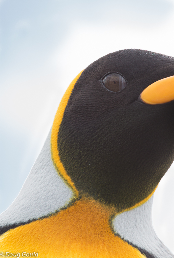 penguins (12 of 13).jpg
