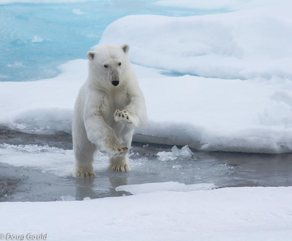 polarbears (3 of 15).jpg