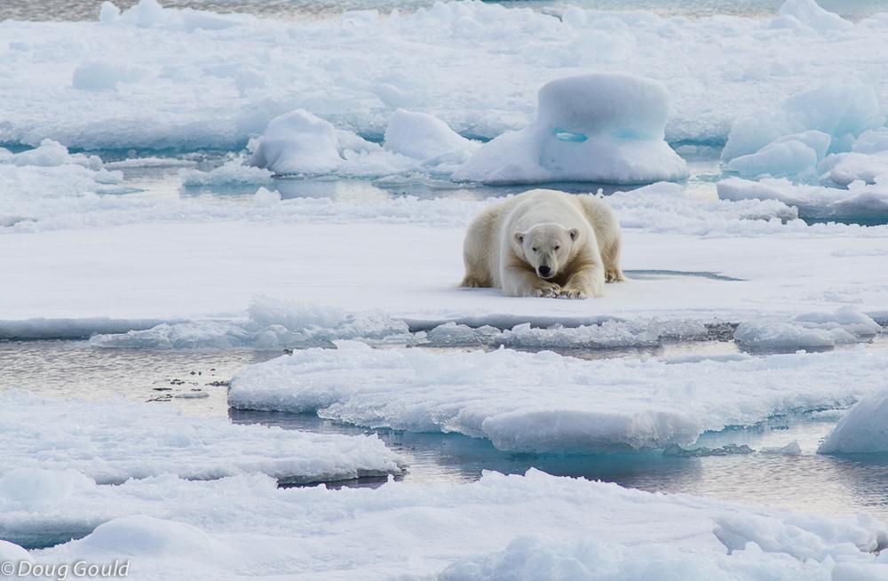 polarbears (5 of 15).jpg