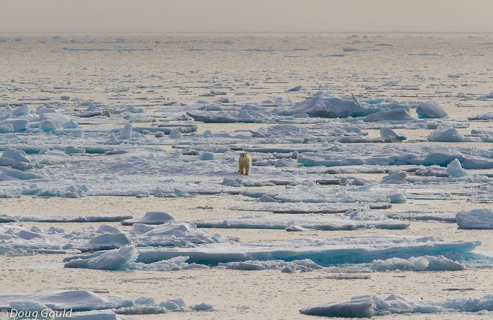 polarbears (4 of 15).jpg