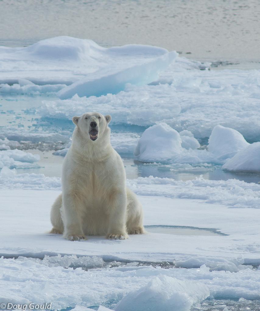 polarbears (6 of 15).jpg