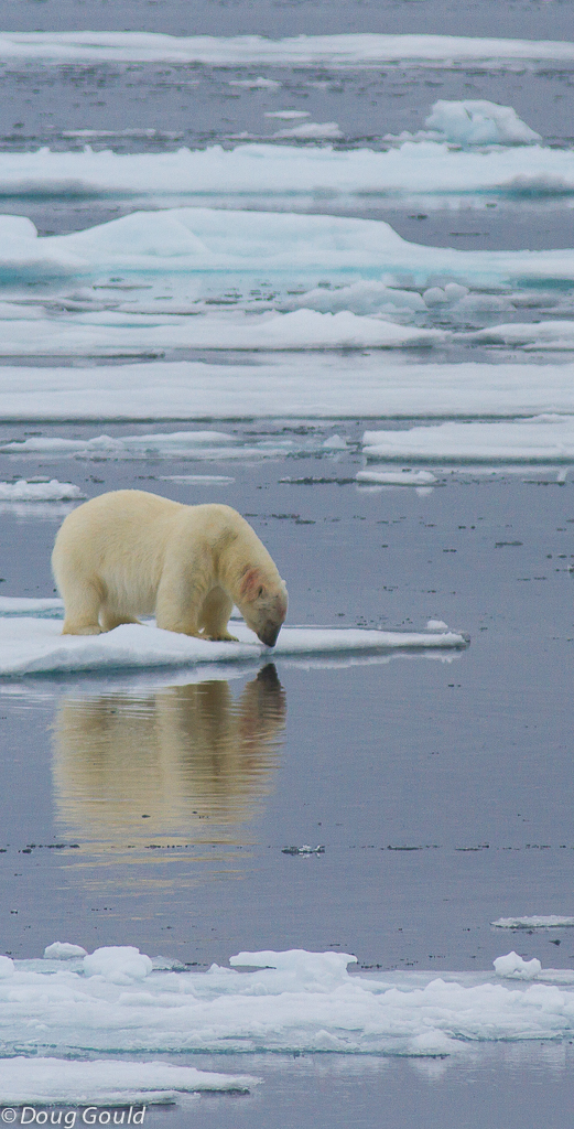polarbears (9 of 15).jpg