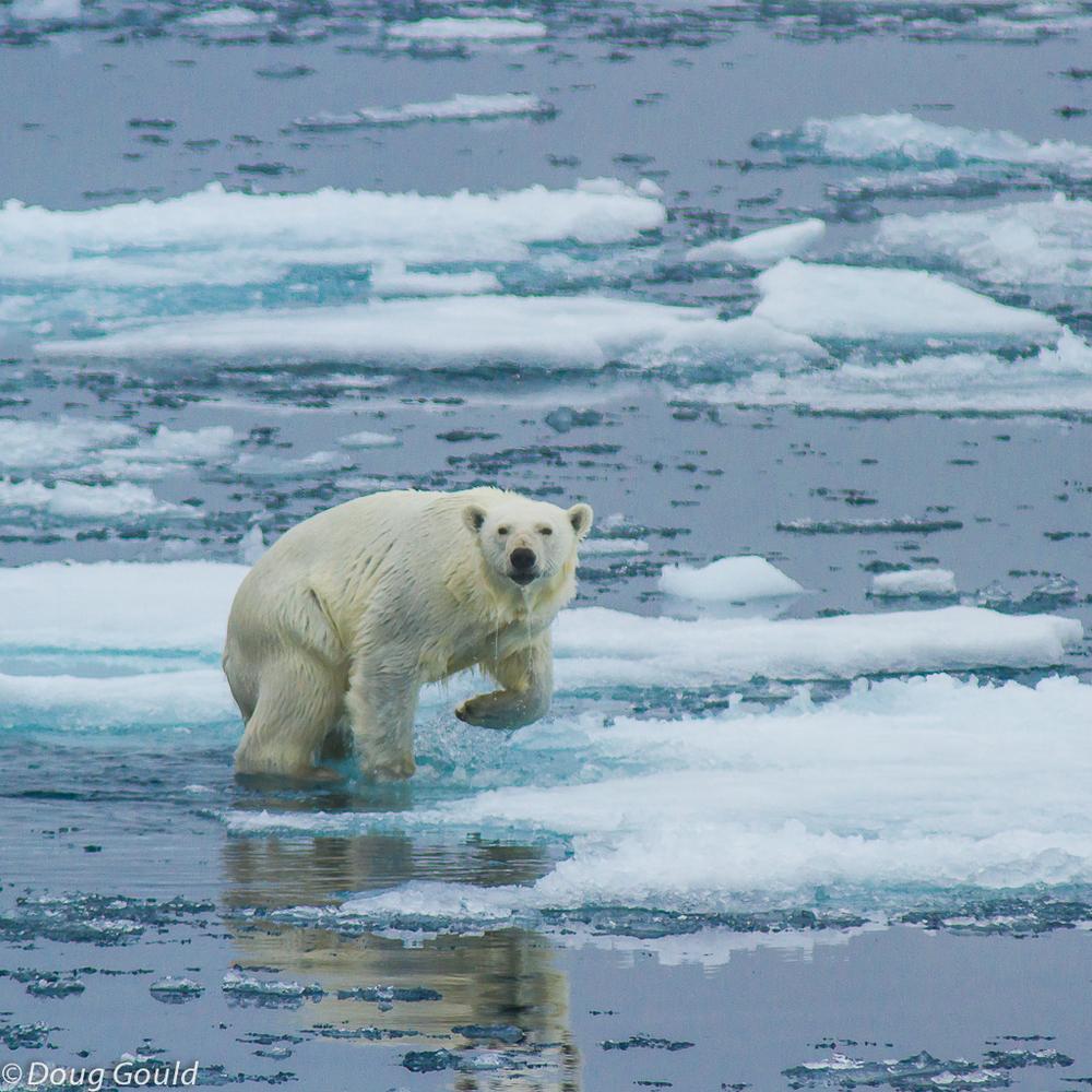 polarbears (8 of 15).jpg