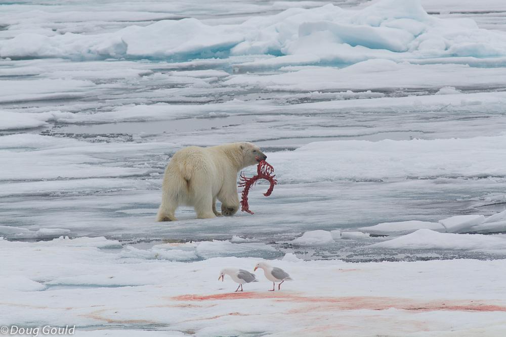 polarbears (10 of 15).jpg