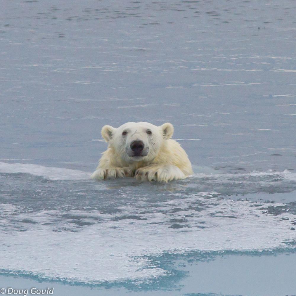 polarbears (11 of 15).jpg