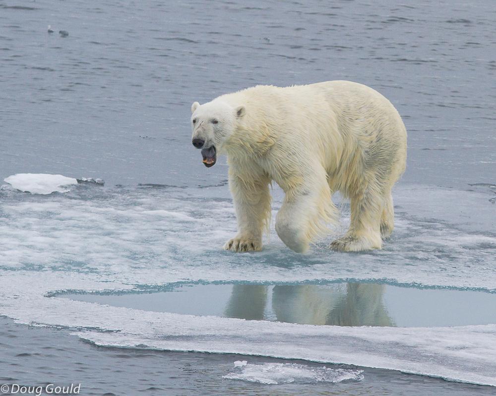 polarbears (12 of 15).jpg