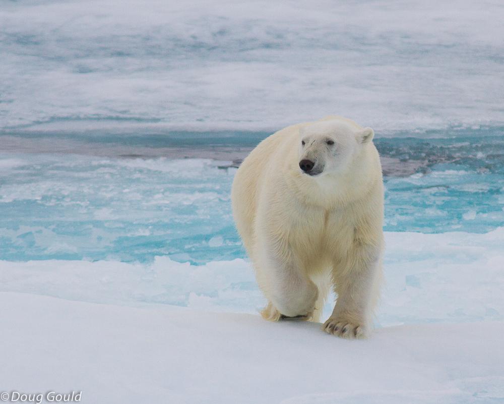 polarbears (14 of 15).jpg