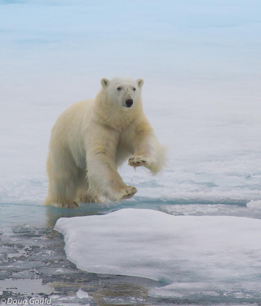 polarbears (13 of 15).jpg
