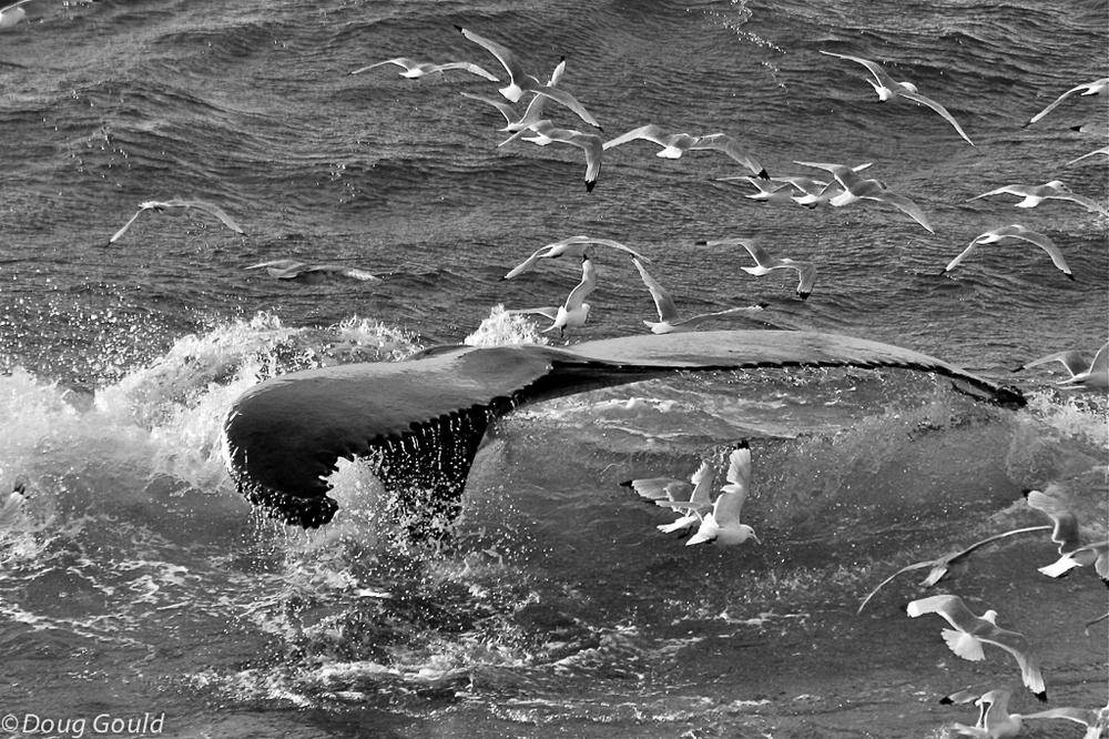 whales (1 of 22).jpg