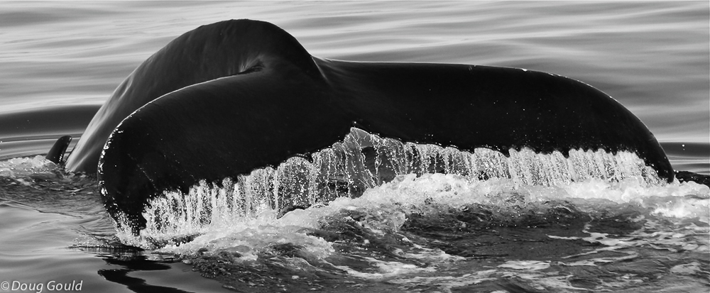 whales (3 of 22).jpg