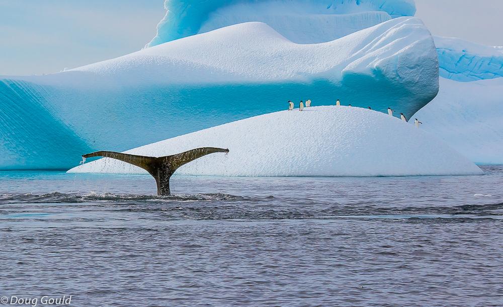 whales (10 of 22).jpg