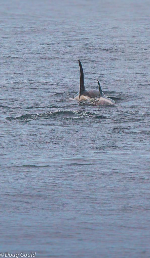 whales (11 of 22).jpg