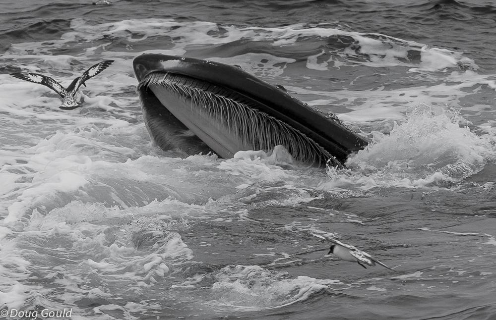 whales (18 of 22).jpg