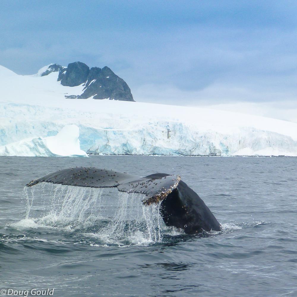 whales (20 of 22).jpg
