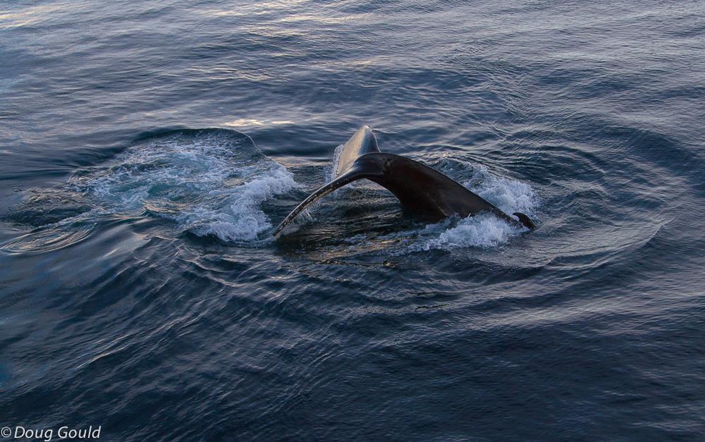whales (22 of 22).jpg