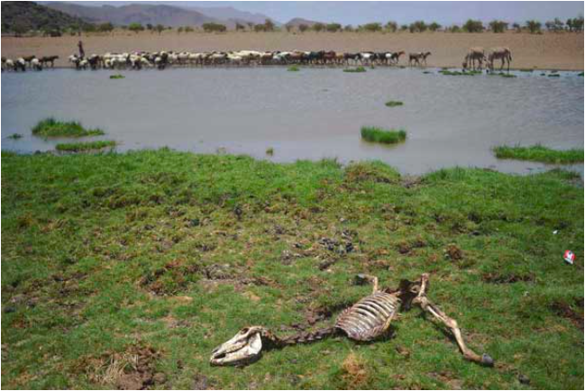 A dead animals lies in the sun near Lokitaung in northern Kenya's Turkana county where a biting drought has ravaged livestock population on March 21, 2017. PHOTO | AFP