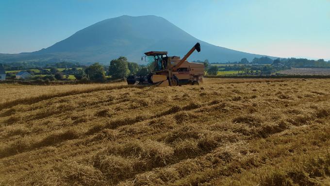 Nephin barley harvest