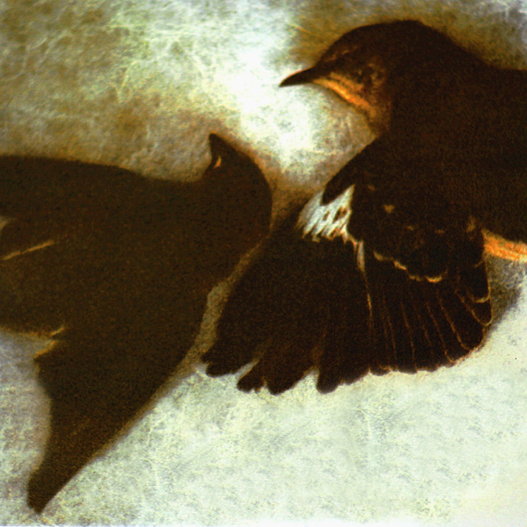 WAXWINGS,   from the  Still Lives  Series.  Tri-color gum bichromate.  Limited edition 2/10